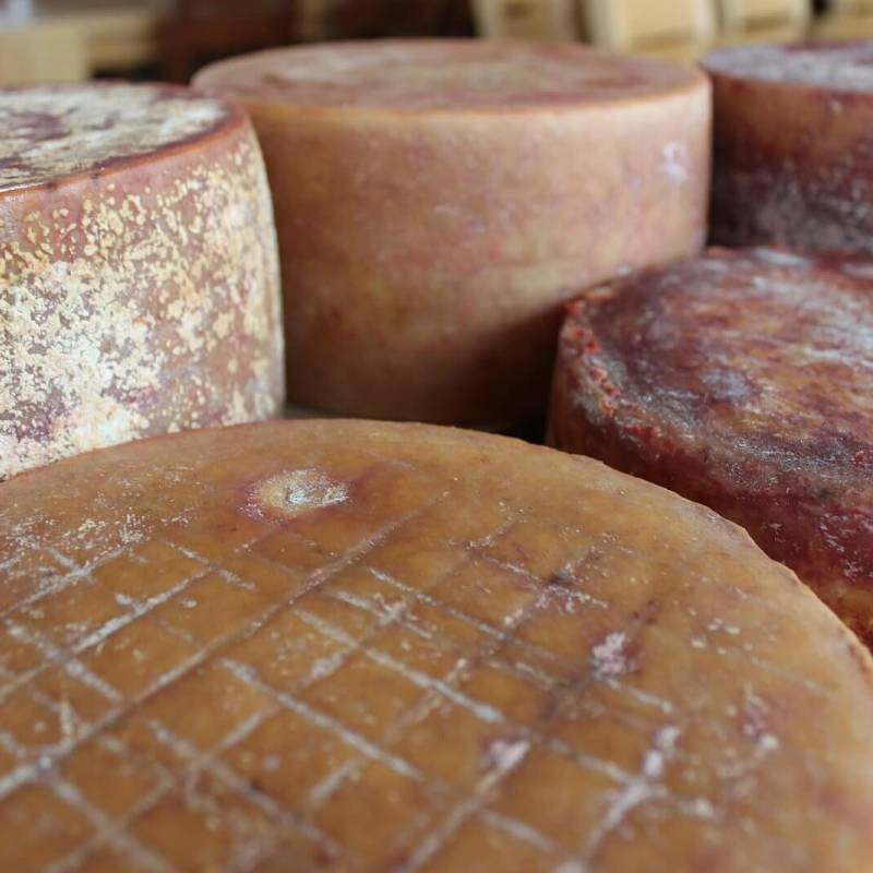 Extra old cow cheeses