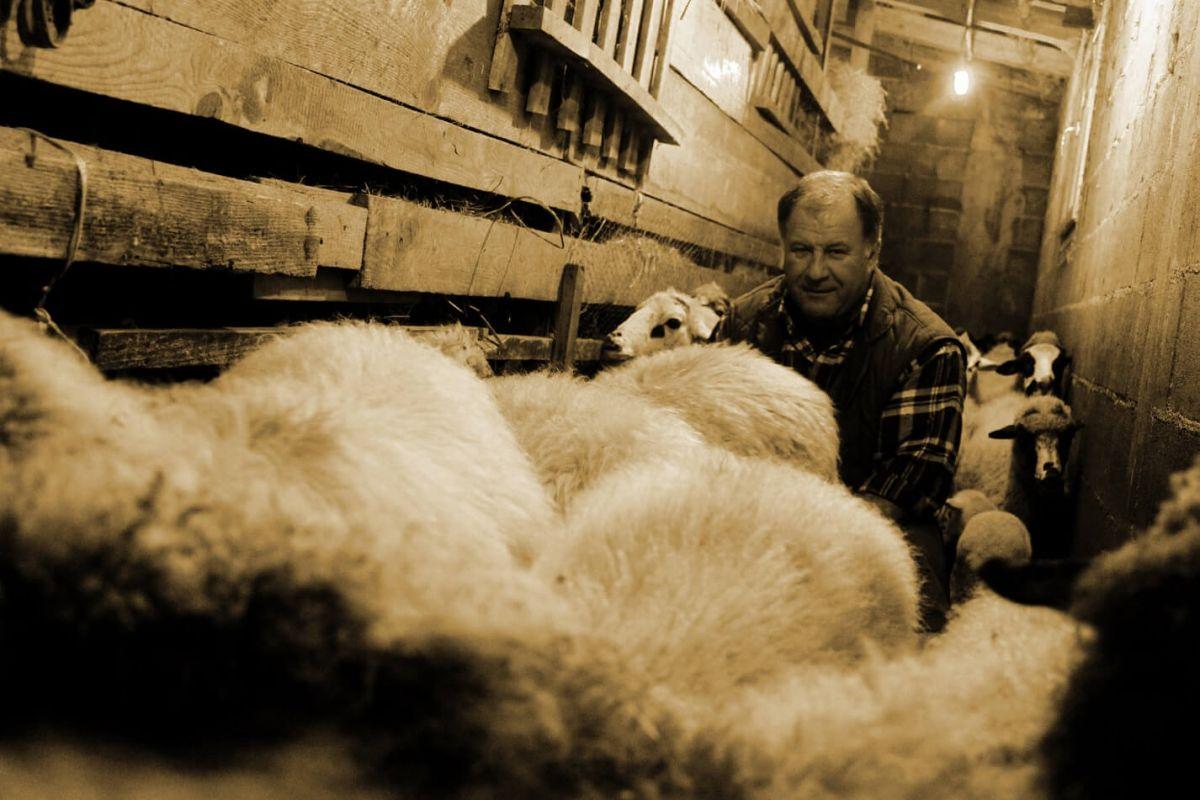 Nenad Fumić i ovce