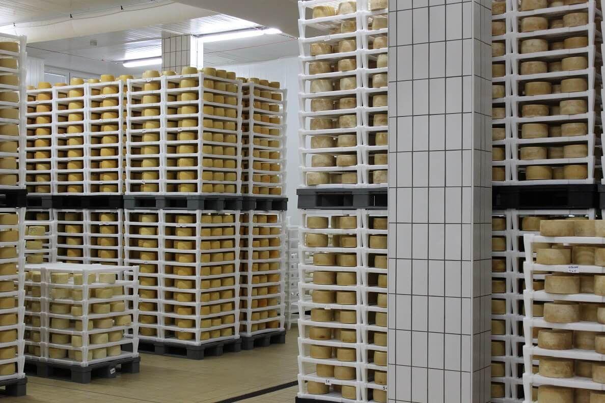 Vođeni obilazak sirane - proizvodnje sira
