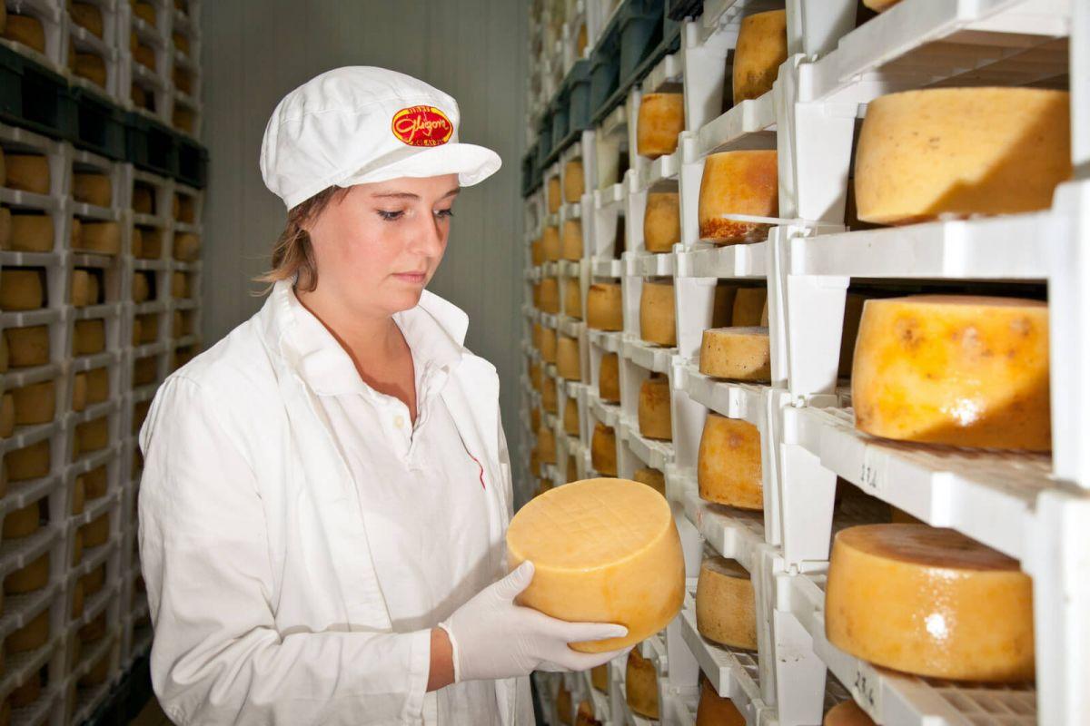 Proizvodnja sira