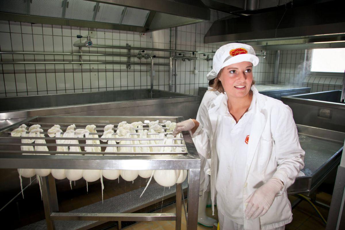 Proizvodnja sira u Hrvatskoj