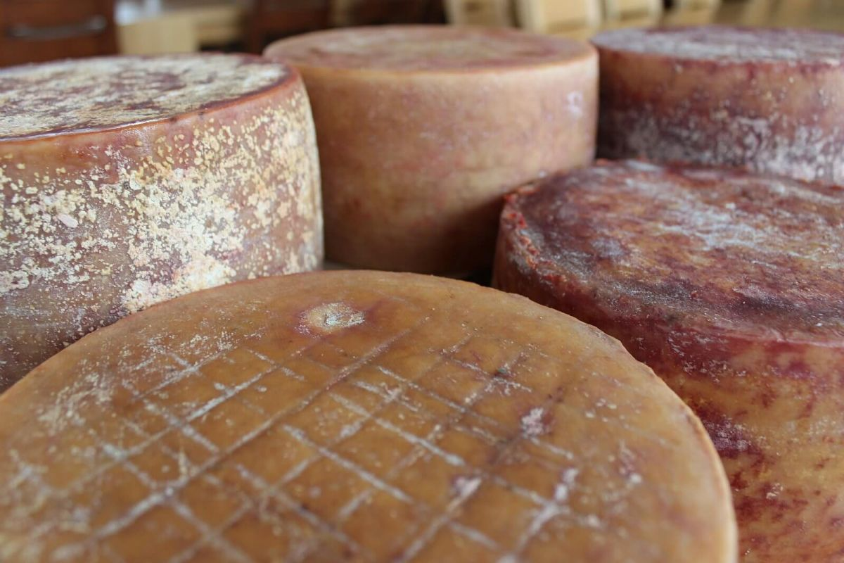 Extra old cow cheeses price, sale, discount Croatia