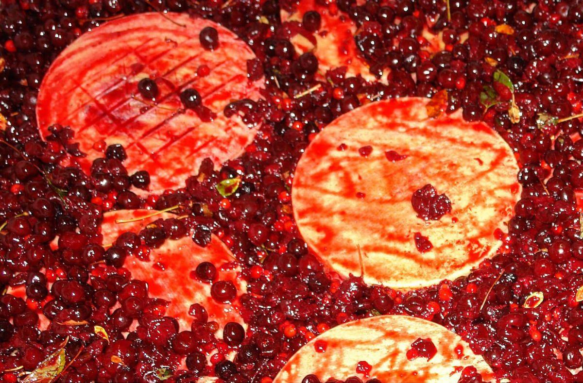 Käse aus Marskatreber Preis, Verkauf, Rabatt Kroatien